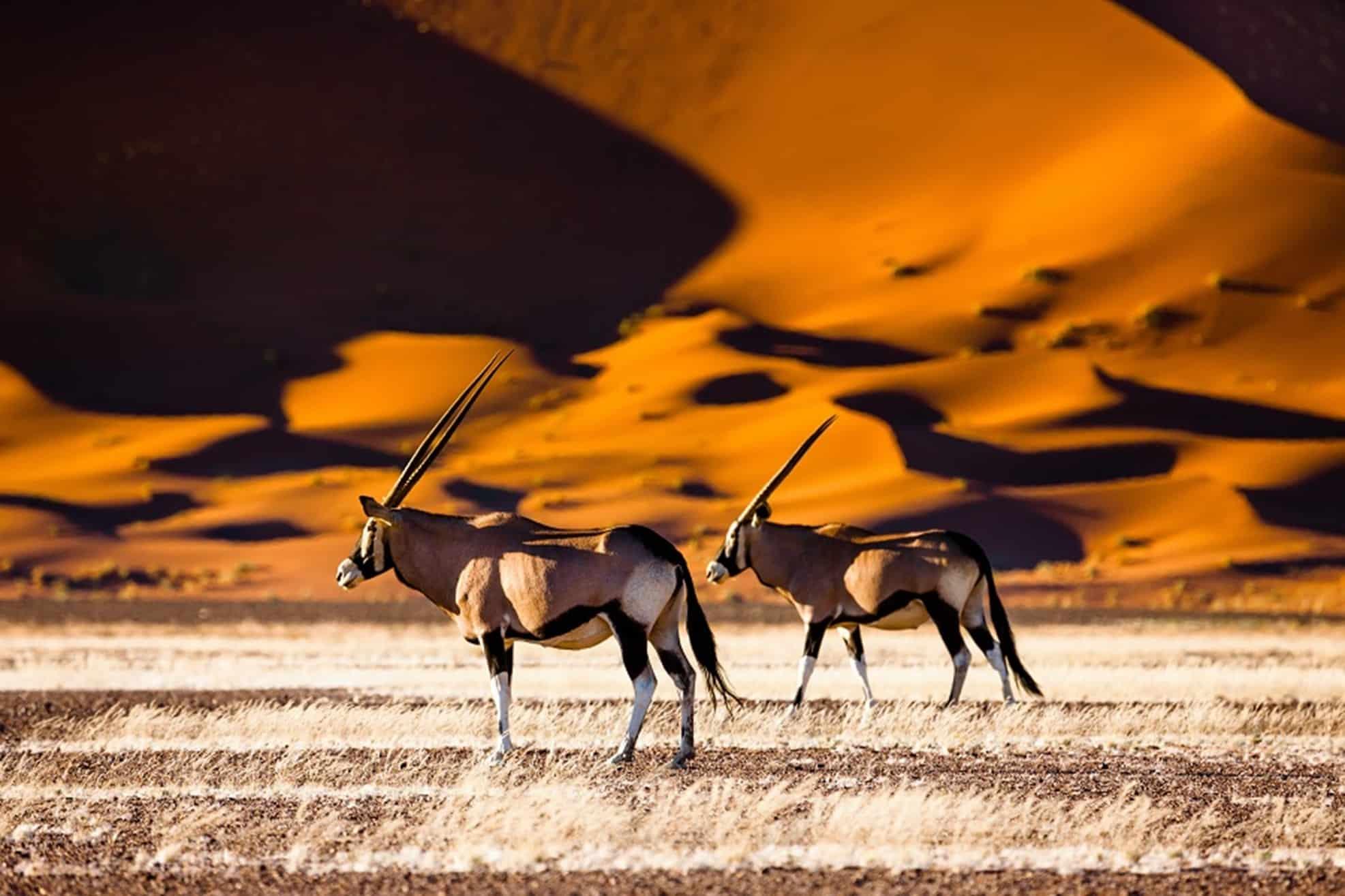 10 raisons de visiter la Namibie