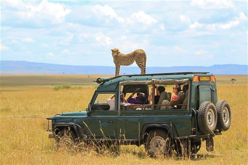 Quelles sont les meilleures destinations pour un safari?