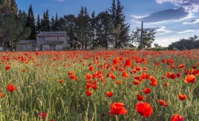 La belle région du Languedoc-Roussillon à découvrir